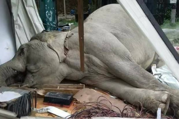 elephant electrocuted 02012018